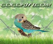 Banner 180x150 - Cocoriti.com