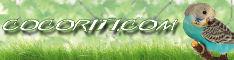 Banner 234x60 - Cocoriti.com