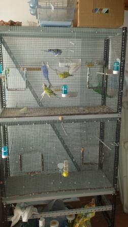 Nova voliera fai da te cocorite e pappagallini ondulati for Voliera fai da te