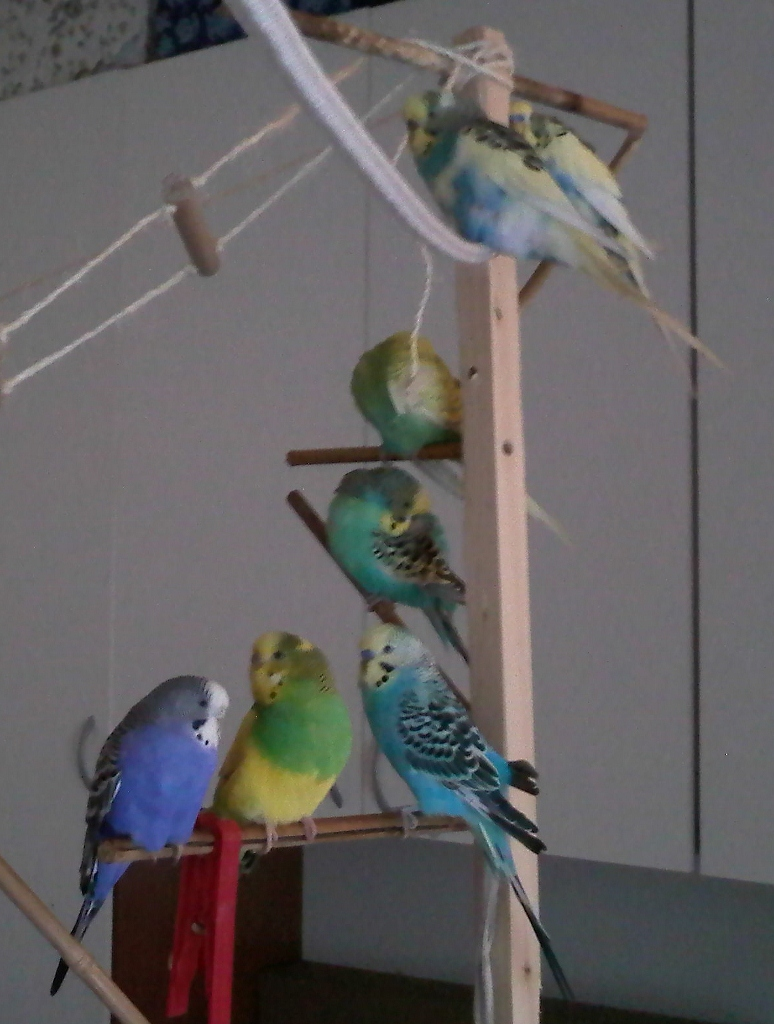 Gli antibiotici e i pappagallini - Vitamine per cocorite ...